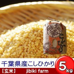 【玄米】 29年産 千葉県産こしひかり 5kg