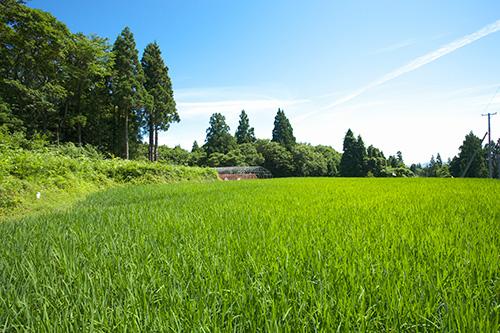 じびき農園について