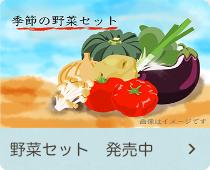 野菜セット発売中
